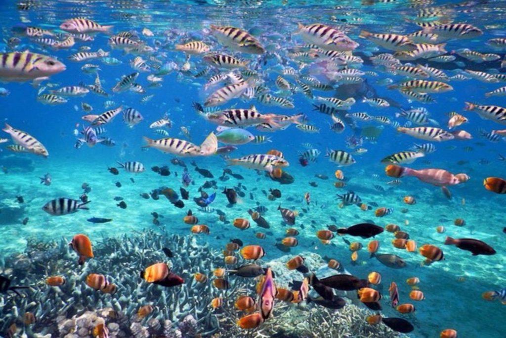 snorkeling dan tour di nusa penida
